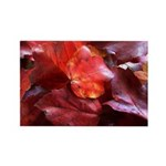 Red Leaves Rectangle Magnet (100 pack)