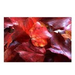 Red Leaves Postcards (Package of 8)