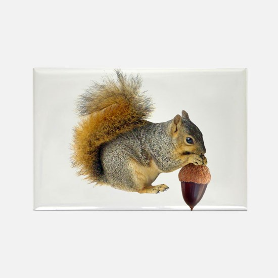 Squirrel Eating Acorn Rectangle Magnet