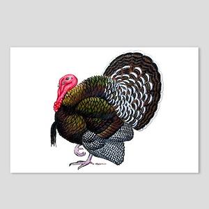 Brown Tom Turkey Postcards (Package of 8)