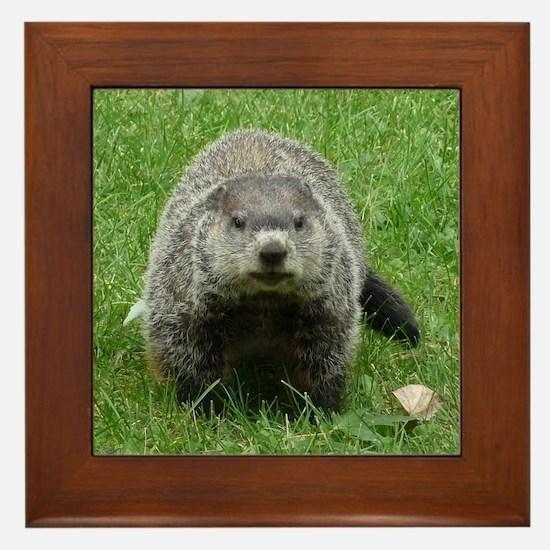 Groundhog (Woodchuck) Framed Tile