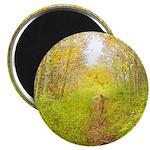 Aspen Trail Deer Magnet