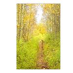 Aspen Trail Deer Postcards (Package of 8)