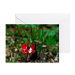 Image of God Greeting Cards (Pk of 20)
