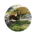 "Welsh Corgi Happy Dog 3.5"" Button"