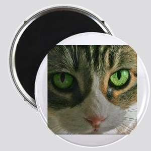 Kitty Eyes Magnet