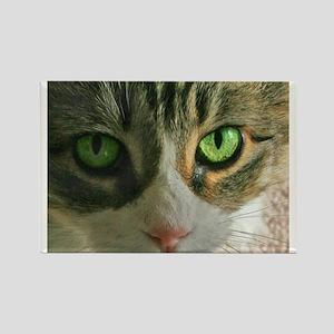 Kitty Eyes Rectangle Magnet