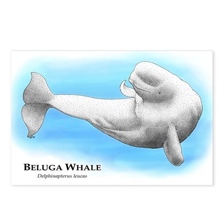 Beluga Whale Postcards (Package of 8)