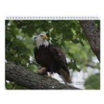 A Year of Eagles Wall Calendar