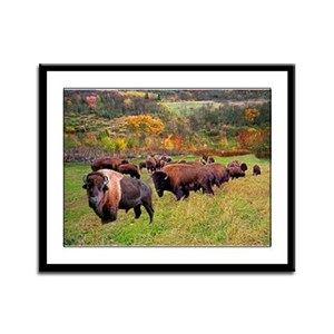 buffalo Framed Panel Print