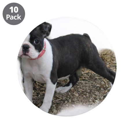 "Boston Terrier Pup 1 3.5"" Button (10 pack)"