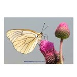 Insect Postcards (Package of 8)