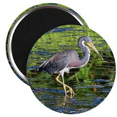 "Tri-colored Heron 2.25"" Magnet (10 pack)"