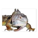 Iguana Postcards (Package of 8)