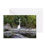 Great Egret Greeting Cards (Pk of 20)