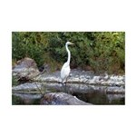 Great Egret Mini Poster Print