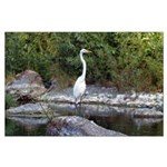 Great Egret Large Poster
