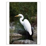 Egret Small Poster