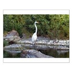 Great Egret Small Poster