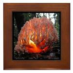 Coral Fungus Mushroom Framed Tile