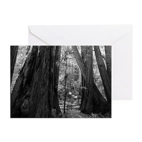California Redwood Tree Trunks Black + White