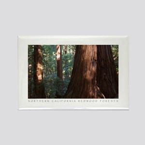 Old Growth Redwood Forest Photography Magnet
