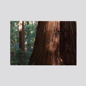 Redwood Forest Rectangle Magnet