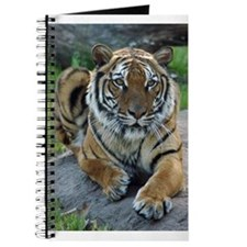 Tiger 4 Journal