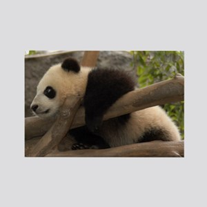 Baby Giant Panda Rectangle Magnet