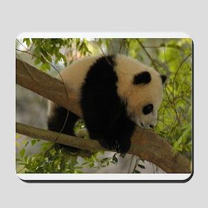 Baby Panda Cub Mousepad