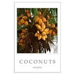 Caribbean Coconuts Large Poster