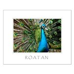 Honduras - Roatan Peacock Print
