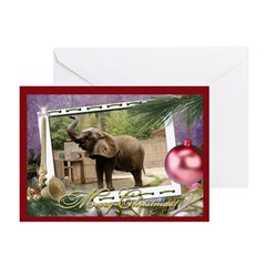 African Elephant Greeting Cards (Pk of 10)