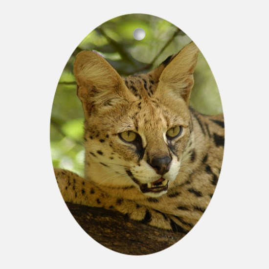 Oval Ornament Serval