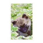 Keeshond Puppy Sticker (Rectangle 50 pk)