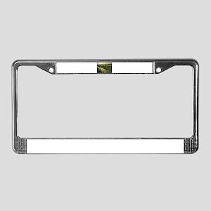 Ala Wai Canal License Plate Frame