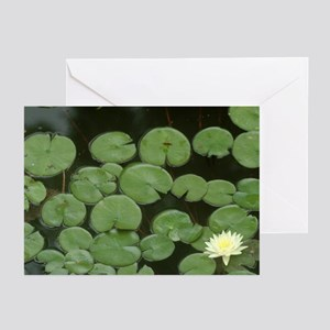 Lily Pads Greeting Cards (Pk of 10)