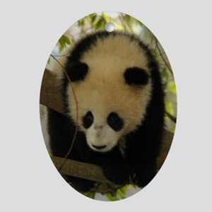 Panda Baby Oval Ornament
