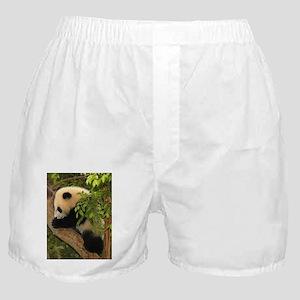Giant Panda Baby 2 Boxer Shorts