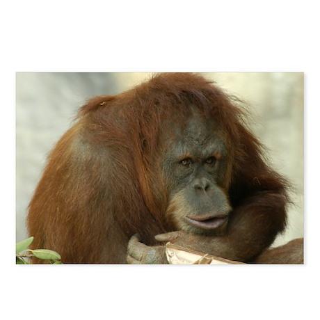 Orangutan 6 Postcards (Package of 8)