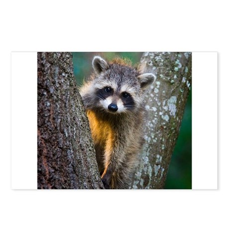 Baby Raccoon Postcards (Package of 8)