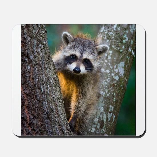 Baby Raccoon Mousepad
