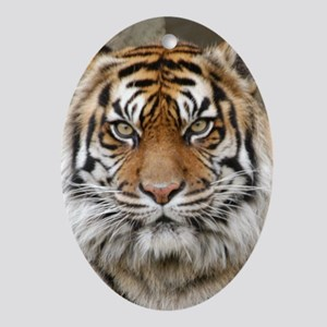 Tiger 12 Oval Ornament