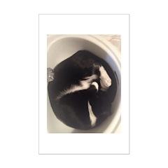 Cat in Sink Poster Print