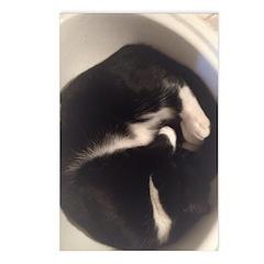 Cat In Sink Postcards (package Of 8)