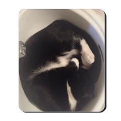 Cat In Sink Mousepad