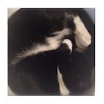 Cat in Sink Tile Coaster