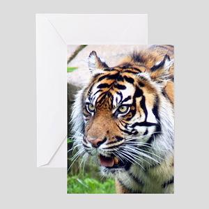 Tiger 7 Greeting Cards (Pk of 10)