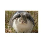 Lop Bunny Rabbit Rectangle Magnet (10 pack)