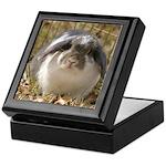 Lop Bunny Rabbit Keepsake Box